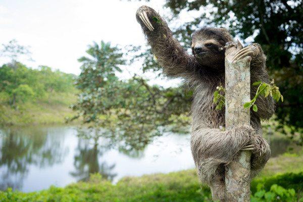 Cali4Travel - Sloth